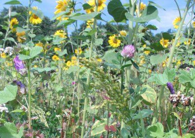 Blühflächen und -streifen