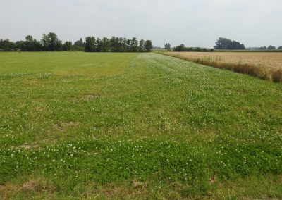 Anbau von Luzerne, Ackergras oder Kleegras