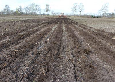 Anbau von Mais im Strip Till-Verfahren in Kombination mit einer bearbeitungsfreier Schonzeit (6)