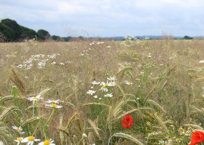 Anbau von Sommergetreide