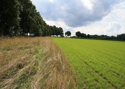 Altgrasstreifen an Wiese