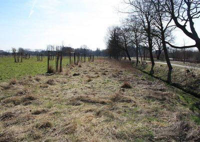 Neupflanzung von Obstbäumen mit Saumstreifen