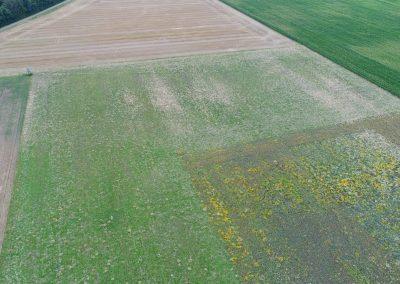 Blühfläche und extensives Feldgras als rotierende PIK