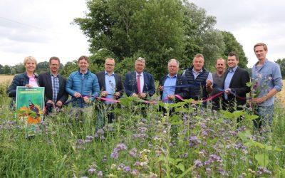Das Blühende Band: Im Münsterland fördern Blühstreifen Insekten und Co.