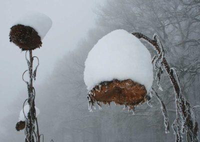 Blühstreifen im Winter: Nahrung und Deckung