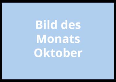 Platzhalter Bild des Monats