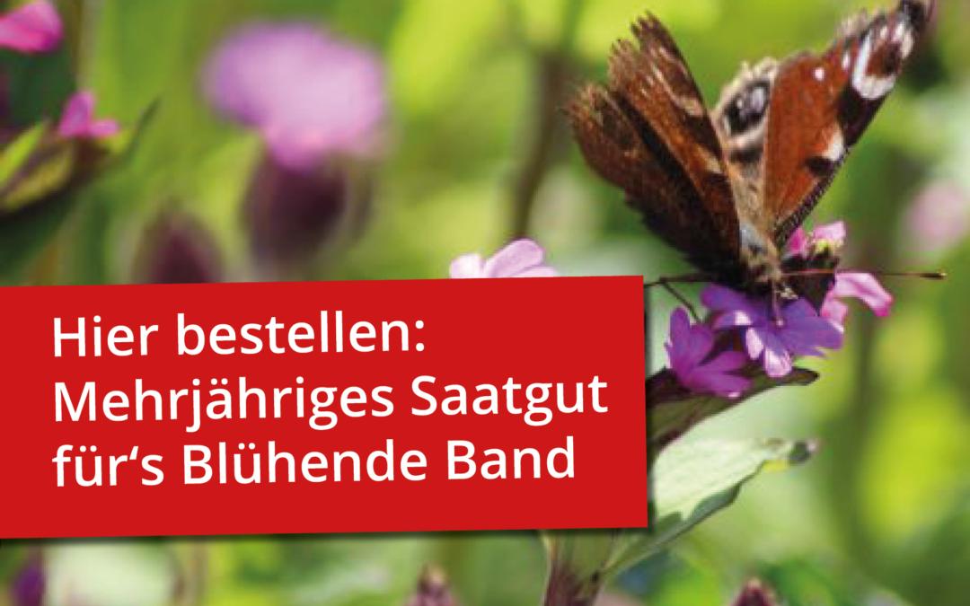Das Blühende Band wird mehrjährig!